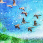 Code no.12  牡羊座12度 野生の鴨の群れ