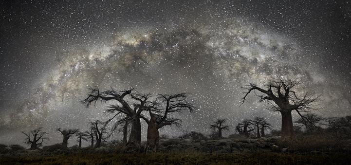 古代樹と宇宙とアストラルサイクル