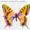 Code no.204 天秤座24度 蝶の左側にある3番目の羽
